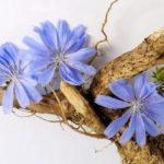 rastvorimyj-cikorij-poleznye-svojstva