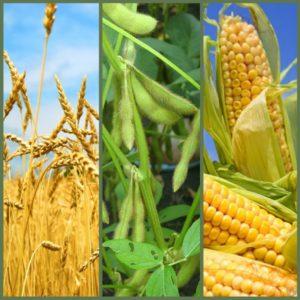 163-10-corn soy wheat