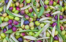 Oliveoil emulsifier